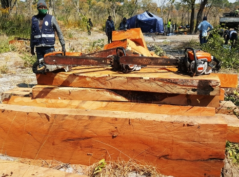 200m3 of illegal Mussivi wood seized in Baixo Longa