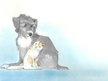 O Cão e o Gato
