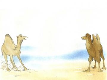 Não é Camelo