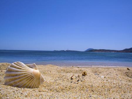 *Concha no Mar*