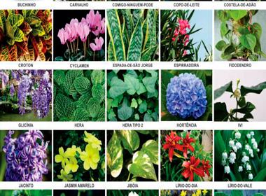 Plantas que s o t xicas para c es e gatos not cias for Plantas ornamentales ejemplos y nombres